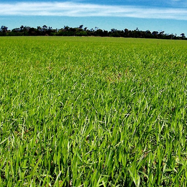 land-grass-1246851